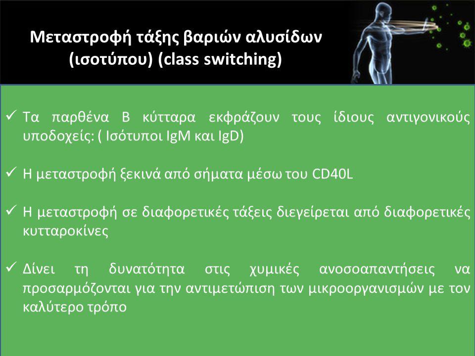 Μεταστροφή τάξης βαριών αλυσίδων (ισοτύπου) (class switching) Τα παρθένα Β κύτταρα εκφράζουν τους ίδιους αντιγονικούς υποδοχείς: ( Ισότυποι IgM και Ig