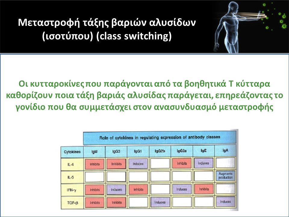 Μεταστροφή τάξης βαριών αλυσίδων (ισοτύπου) (class switching) Οι κυτταροκίνες που παράγονται από τα βοηθητικά Τ κύτταρα καθορίζουν ποια τάξη βαριάς αλ