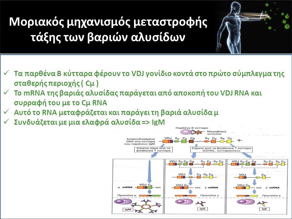 Μοριακός μηχανισμός μεταστροφής τάξης των βαριών αλυσίδων Τα παρθένα Β κύτταρα φέρουν το VDJ γονίδιο κοντά στο πρώτο σύμπλεγμα της σταθερής περιοχής (