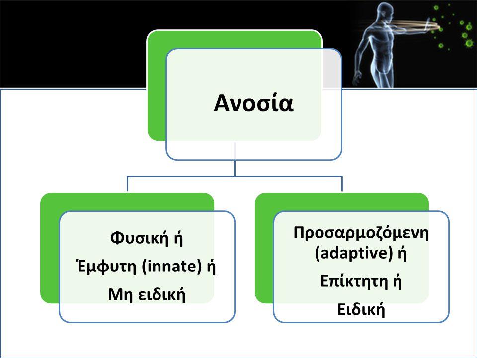 Ωρίμανση συγγένειας Είναι το αποτέλεσμα υπερμεταλλάξεων των γονιδίων Ig στα διαιρούμενα Β κύτταρα, ακολουθούμενη από την επιλογή των Β κυττάρων υψηλής συγγένειας στο αντιγόνο που παρουσιάζεται από τα λεμφοζιδιακά δενδριτικά κύτταρα.
