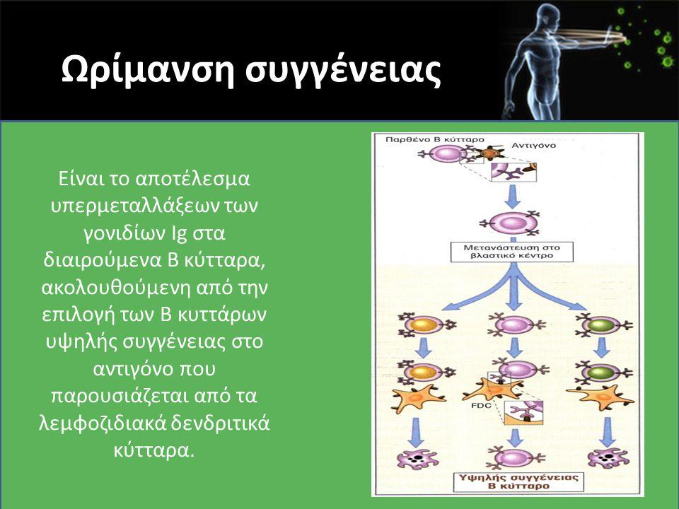 Ωρίμανση συγγένειας Είναι το αποτέλεσμα υπερμεταλλάξεων των γονιδίων Ig στα διαιρούμενα Β κύτταρα, ακολουθούμενη από την επιλογή των Β κυττάρων υψηλής