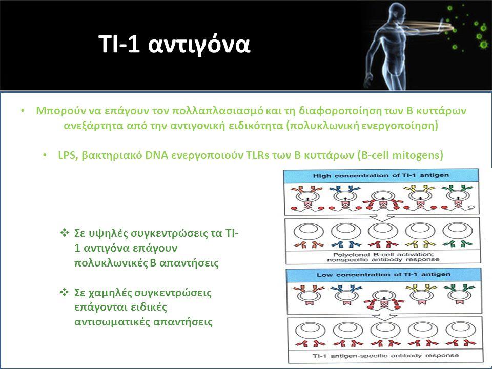 TI-1 αντιγόνα Μπορούν να επάγουν τον πολλαπλασιασμό και τη διαφοροποίηση των Β κυττάρων ανεξάρτητα από την αντιγονική ειδικότητα (πολυκλωνική ενεργοπο
