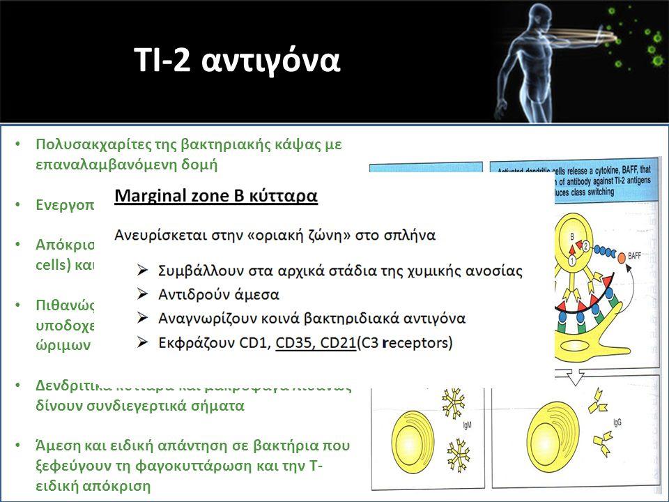 TI-2 αντιγόνα Πολυσακχαρίτες της βακτηριακής κάψας με επαναλαμβανόμενη δομή Ενεργοποιούν μόνο Β κύτταρα ατόμων > 5έτη Απόκριση κυρίως από Β-1 κύτταρα