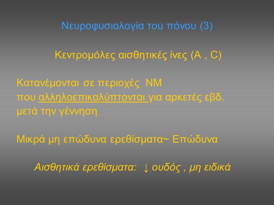Νευροφυσιολογία του πόνου (3) Κεντρομόλες αισθητικές ίνες (Α, C) Κατανέμονται σε περιοχές ΝΜ που αλληλοεπικαλύπτονται για αρκετές εβδ. μετά την γέννησ