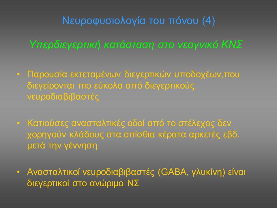Νευροφυσιολογία του πόνου (4) Υπερδιεγερτική κατάσταση στο νεογνικό ΚΝΣ Παρουσία εκτεταμένων διεγερτικών υποδοχέων,που διεγείρονται πιο εύκολα από διε