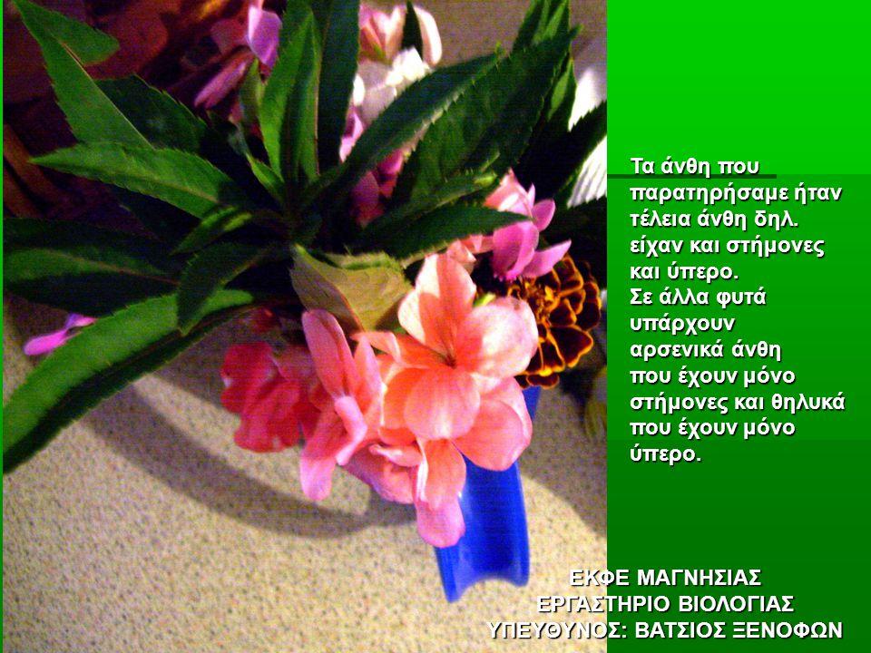 ΕΚΦΕ ΜΑΓΝΗΣΙΑΣ ΕΡΓΑΣΤΗΡΙΟ ΒΙΟΛΟΓΙΑΣ ΥΠΕΥΘΥΝΟΣ: ΒΑΤΣΙΟΣ ΞΕΝΟΦΩΝ Τα άνθη που παρατηρήσαμε ήταν τέλεια άνθη δηλ.