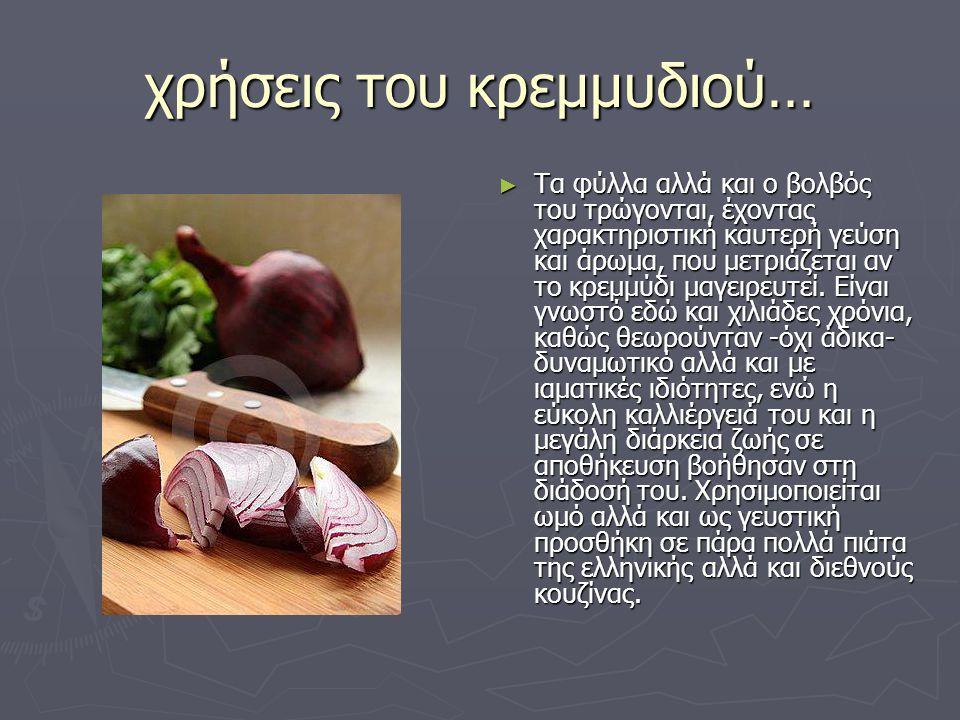 χρήσεις του κρεμμυδιού… ► Τα φύλλα αλλά και ο βολβός του τρώγονται, έχοντας χαρακτηριστική καυτερή γεύση και άρωμα, που μετριάζεται αν το κρεμμύδι μαγ
