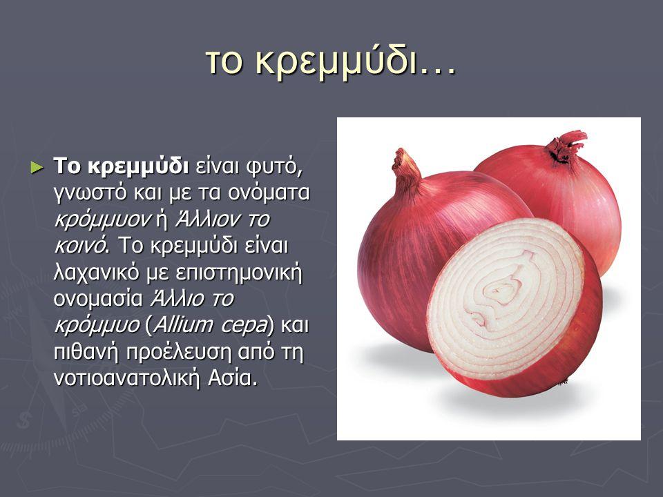το κρεμμύδι… ► Το κρεμμύδι είναι φυτό, γνωστό και με τα ονόματα κρόμμυον ή Άλλιον το κοινό. Το κρεμμύδι είναι λαχανικό με επιστημονική ονομασία Άλλιο