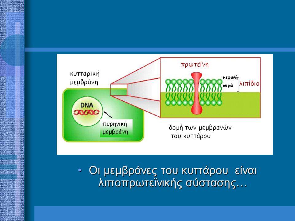 Οι μεμβράνες του κυττάρου είναι λιποπρωτεϊνικής σύστασης…Οι μεμβράνες του κυττάρου είναι λιποπρωτεϊνικής σύστασης…