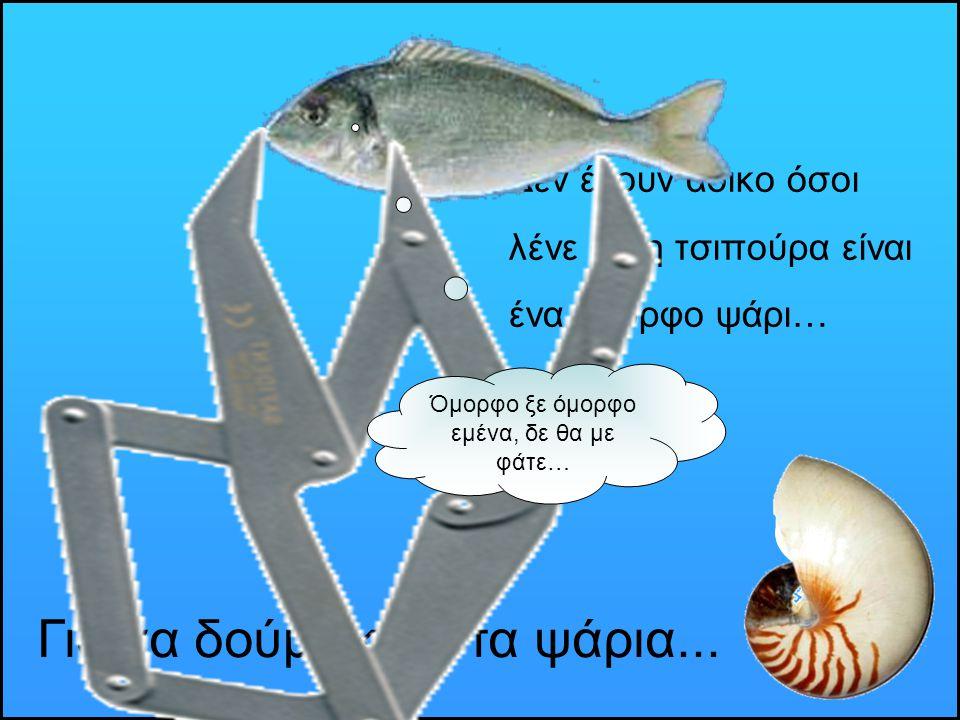 Δεν έχουν άδικο όσοι λένε ότι η τσιπούρα είναι ένα όμορφο ψάρι… Για να δούμε και στα ψάρια... Όμορφο ξε όμορφο εμένα, δε θα με φάτε…