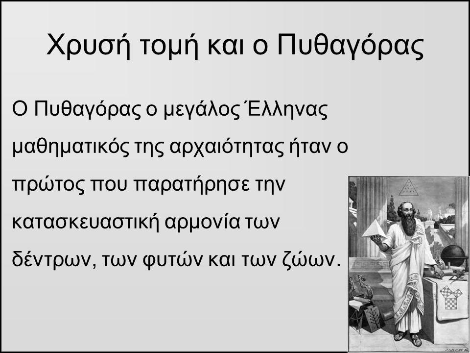 Χρυσή τομή και ο Πυθαγόρας Ο Πυθαγόρας ο μεγάλος Έλληνας μαθηματικός της αρχαιότητας ήταν ο πρώτος που παρατήρησε την κατασκευαστική αρμονία των δέντρ