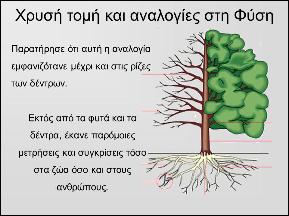 Παρατήρησε ότι αυτή η αναλογία εμφανιζότανε μέχρι και στις ρίζες των δέντρων. Εκτός από τα φυτά και τα δέντρα, έκανε παρόμοιες μετρήσεις και συγκρίσει