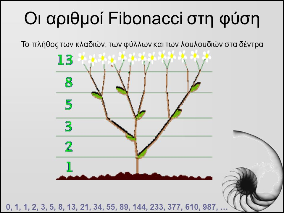 Οι αριθμοί Fibonacci στη φύση 0, 1, 1, 2, 3, 5, 8, 13, 21, 34, 55, 89, 144, 233, 377, 610, 987, … Το πλήθος των κλαδιών, των φύλλων και των λουλουδιών