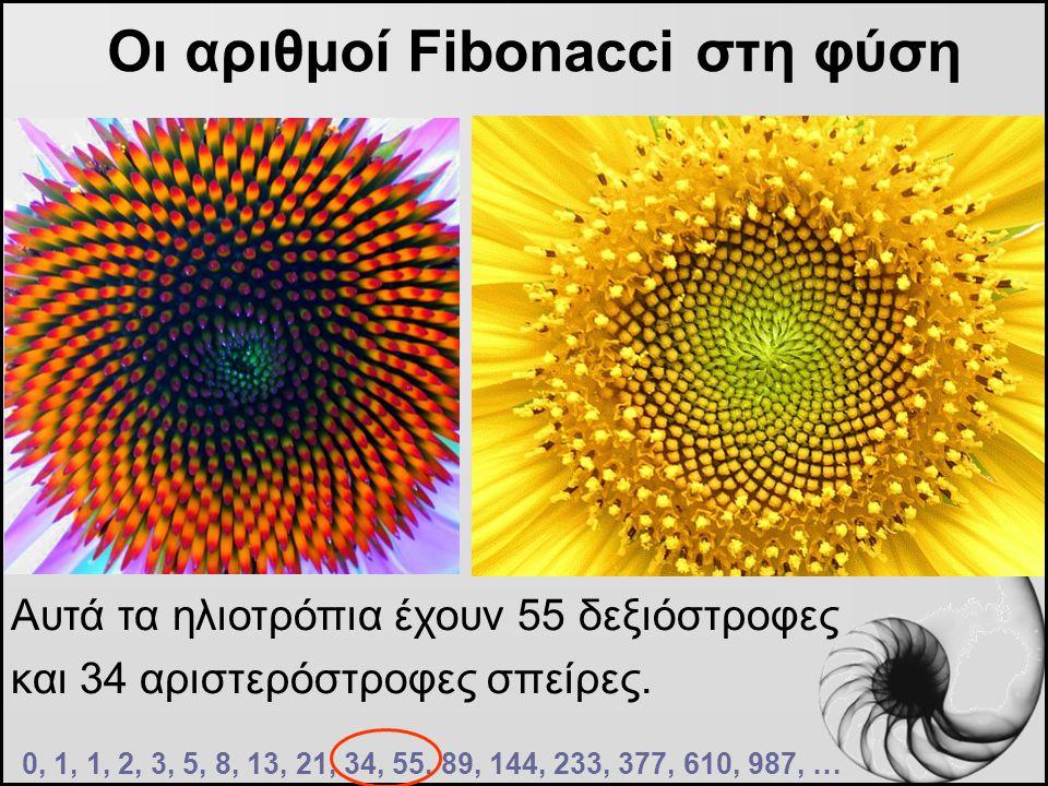 Οι αριθμοί Fibonacci στη φύση Αυτά τα ηλιοτρόπια έχουν 55 δεξιόστροφες και 34 αριστερόστροφες σπείρες. 0, 1, 1, 2, 3, 5, 8, 13, 21, 34, 55, 89, 144, 2