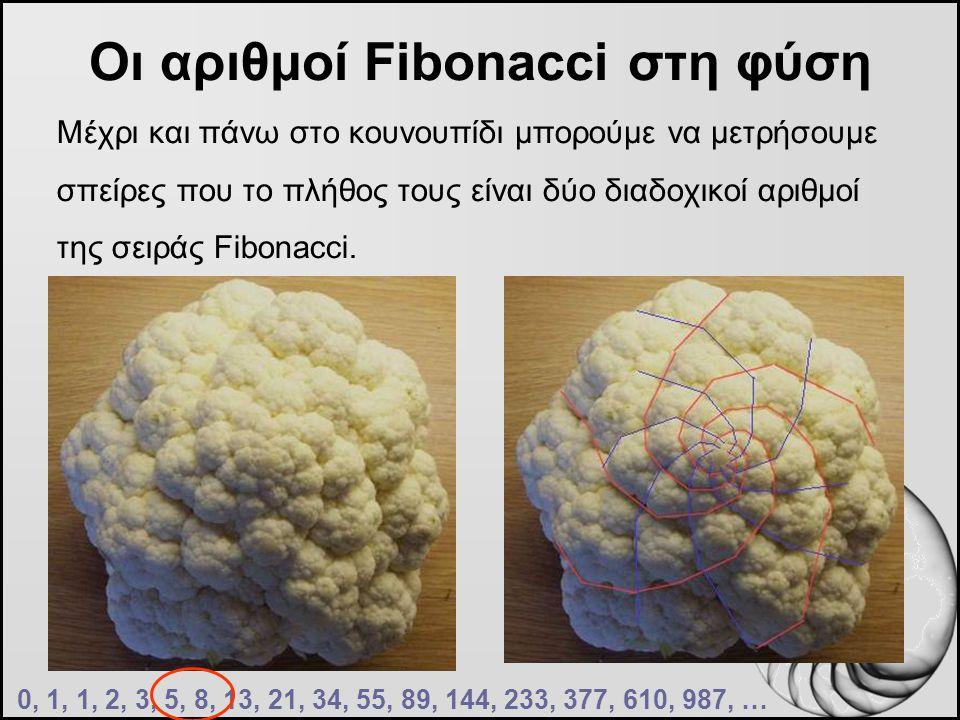 Οι αριθμοί Fibonacci στη φύση Μέχρι και πάνω στο κουνουπίδι μπορούμε να μετρήσουμε σπείρες που το πλήθος τους είναι δύο διαδοχικοί αριθμοί της σειράς