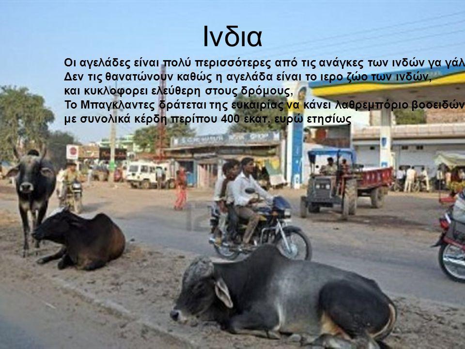 Ινδια Οι αγελάδες είναι πολύ περισσότερες από τις ανάγκες των ινδών γα γάλα. Δεν τις θανατώνουν καθώς η αγελάδα είναι το ιερο ζώο των ινδών, και κυκλο