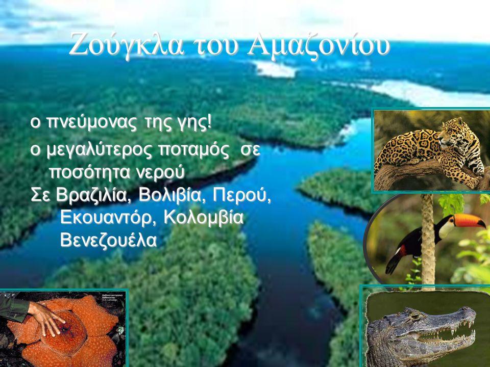 28 Ζούγκλα του Αμαζονίου ο πνεύμονας της γης! ο μεγαλύτερος ποταμός σε ποσότητα νερού Σε Βραζιλία, Βολιβία, Περού, Εκουαντόρ, Κολομβία Εκουαντόρ, Κολο