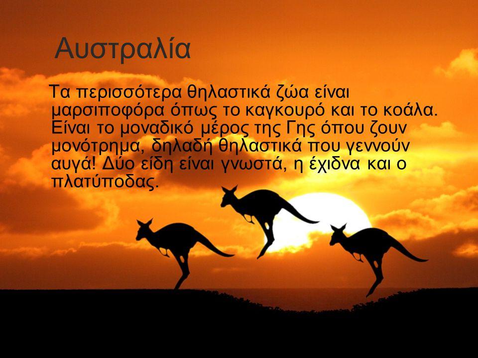 Τα περισσότερα θηλαστικά ζώα είναι μαρσιποφόρα όπως το καγκουρό και το κοάλα. Είναι το μοναδικό μέρος της Γης όπου ζουν μονότρημα, δηλαδή θηλαστικά πο
