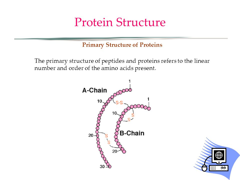 33 Protein Structure Primary Structure of Proteins The primary structure of peptides and proteins refers to the linear number and order of the amino acids present.
