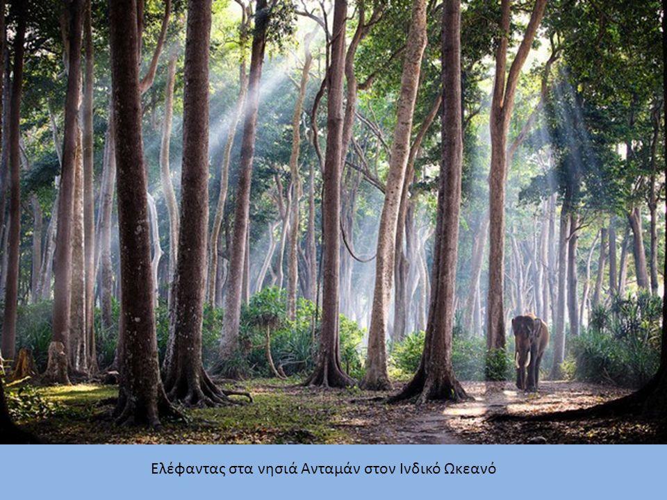 Ελέφαντας στα νησιά Ανταμάν στον Ινδικό Ωκεανό