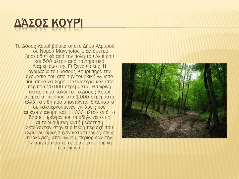 Το Δάσος Κουρί βρίσκεται στο Δήμο Αλμυρού του Νομού Μαγνησίας 1 χιλιόμετρο βορειοδυτικά από την πόλη του Αλμυρού και 500 μέτρα από το Δημοτικό Διαμέρι