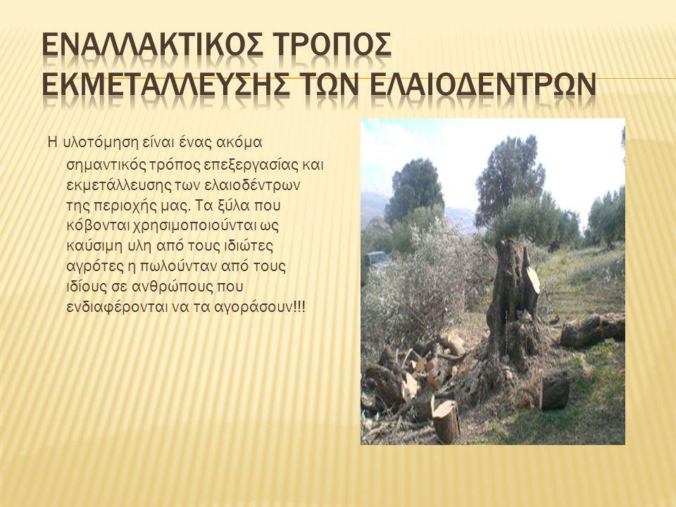 Η υλοτόμηση είναι ένας ακόμα σημαντικός τρόπος επεξεργασίας και εκμετάλλευσης των ελαιοδέντρων της περιοχής μας. Τα ξύλα που κόβονται χρησιμοποιούνται