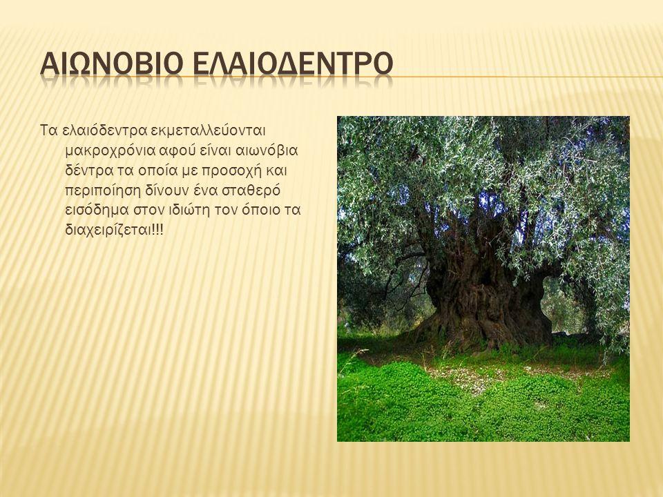 Τα ελαιόδεντρα εκμεταλλεύονται μακροχρόνια αφού είναι αιωνόβια δέντρα τα οποία με προσοχή και περιποίηση δίνουν ένα σταθερό εισόδημα στον ιδιώτη τον ό