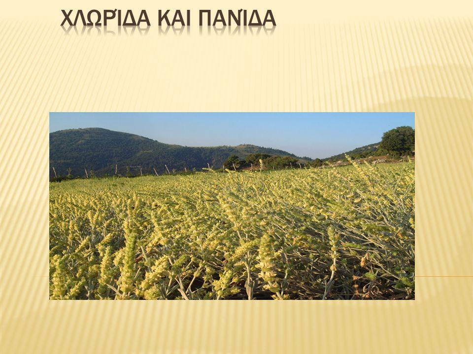 Τα αρωματικά φυτά έχουν χρησιμοποιηθεί για εκατοντάδες χρόνια σε κάθε σημείο της γης από πολυάριθμους πολιτισμούς.