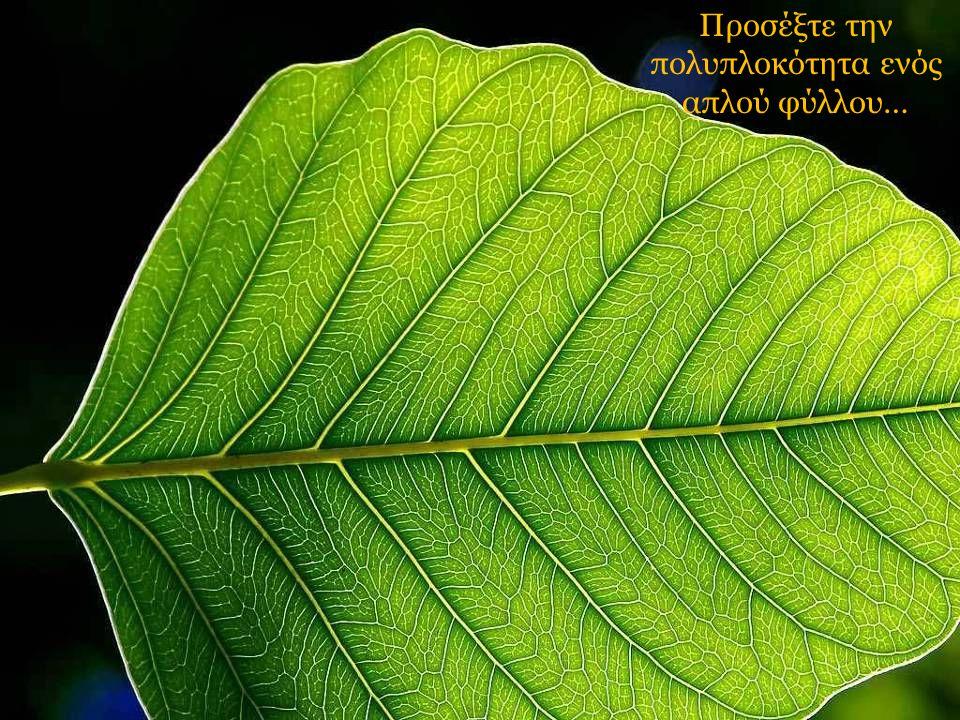 Προσέξτε την πολυπλοκότητα ενός απλού φύλλου…