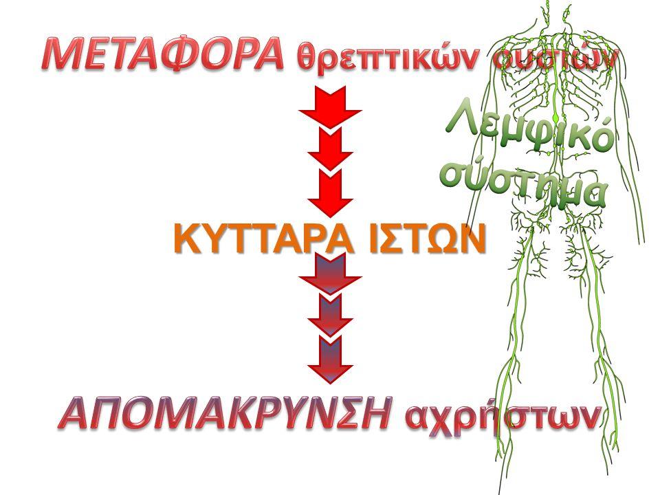 ΚΥΤΤΑΡΑ ΙΣΤΩΝ