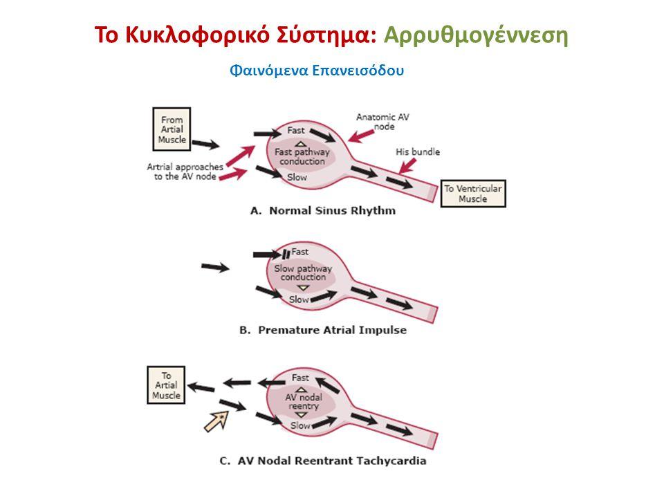 Το Κυκλοφορικό Σύστημα: Αρρυθμογέννεση Φαινόμενα Επανεισόδου