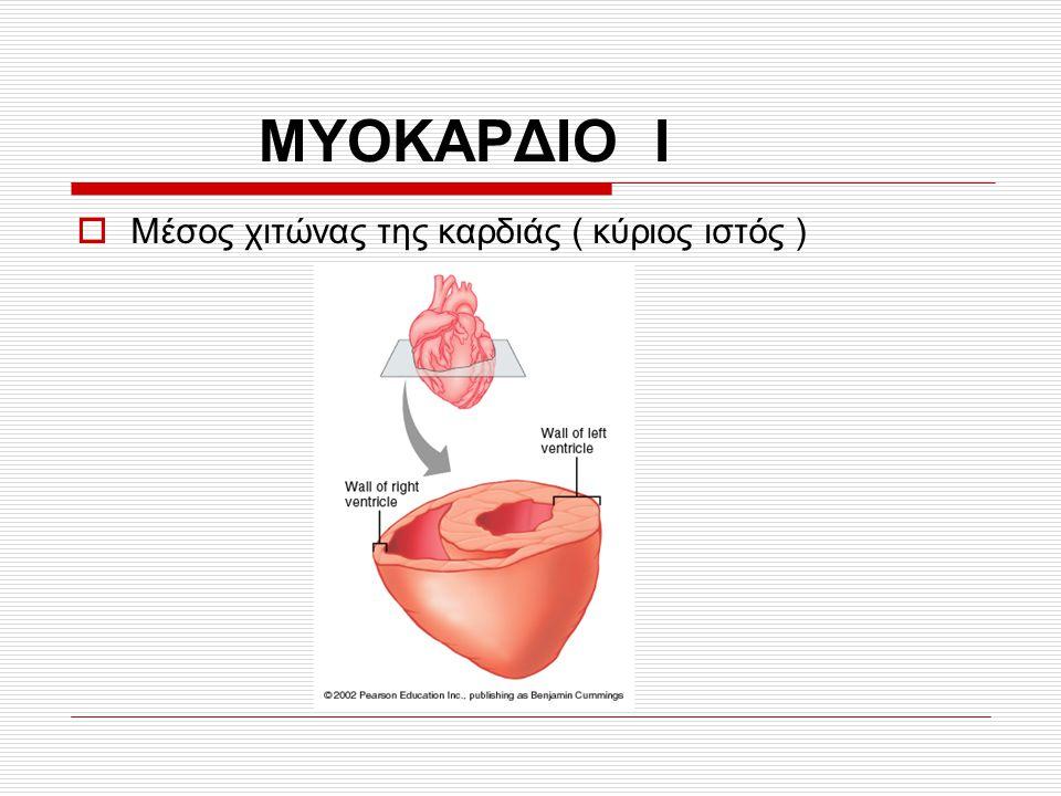 ΜΥΟΚΑΡΔΙΟ Ι  Μέσος χιτώνας της καρδιάς ( κύριος ιστός )