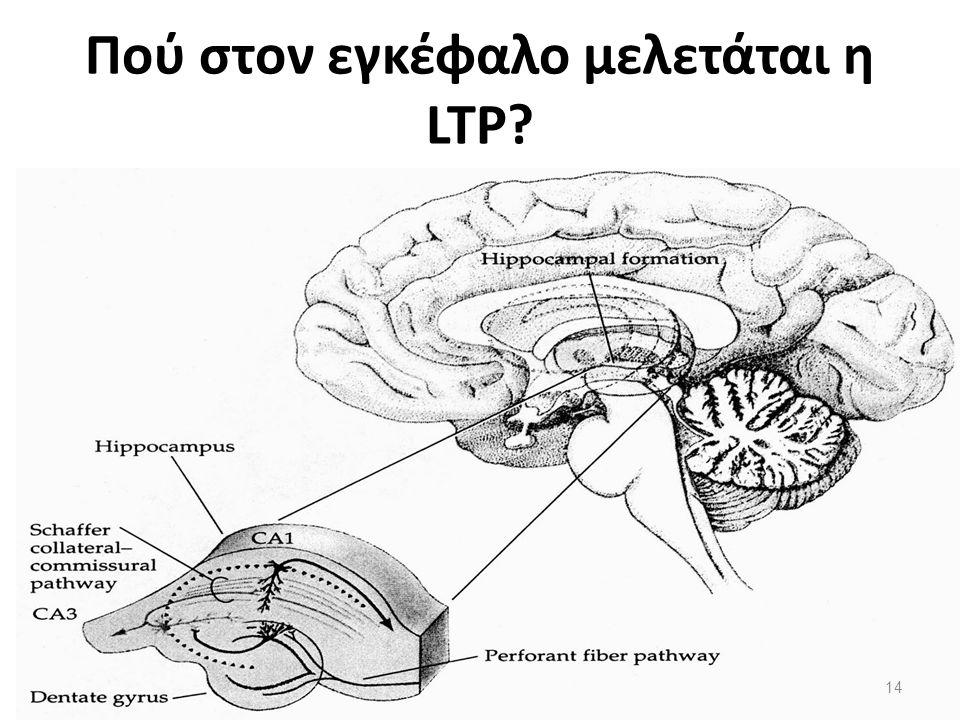 Πού στον εγκέφαλο μελετάται η LTP? 14