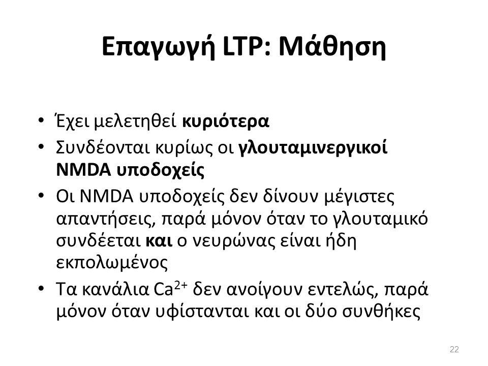 Επαγωγή LTP: Μάθηση Έχει μελετηθεί κυριότερα Συνδέονται κυρίως οι γλουταμινεργικοί NMDA υποδοχείς Οι NMDA υποδοχείς δεν δίνουν μέγιστες απαντήσεις, πα