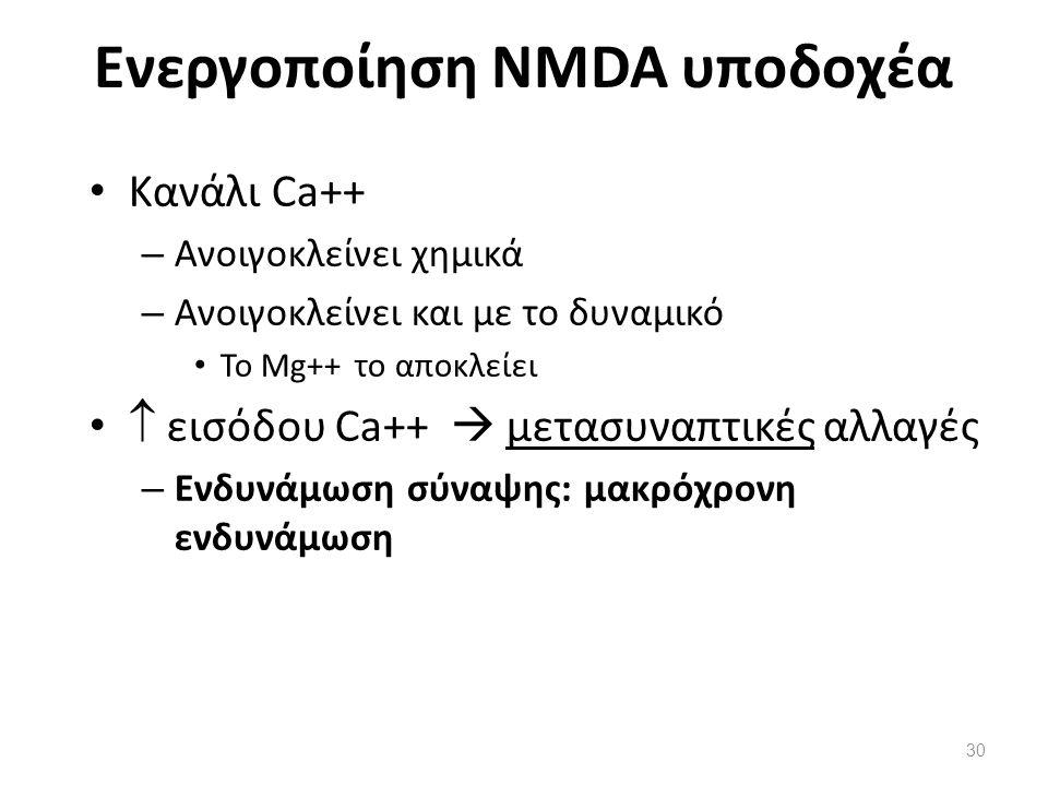 Ενεργοποίηση NMDA υποδοχέα Κανάλι Ca++ – Ανοιγοκλείνει χημικά – Ανοιγοκλείνει και με το δυναμικό Το Mg++ το αποκλείει  εισόδου Ca++  μετασυναπτικές