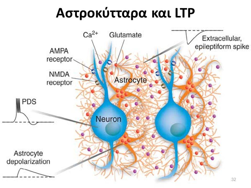 Αστροκύτταρα και LTP 32