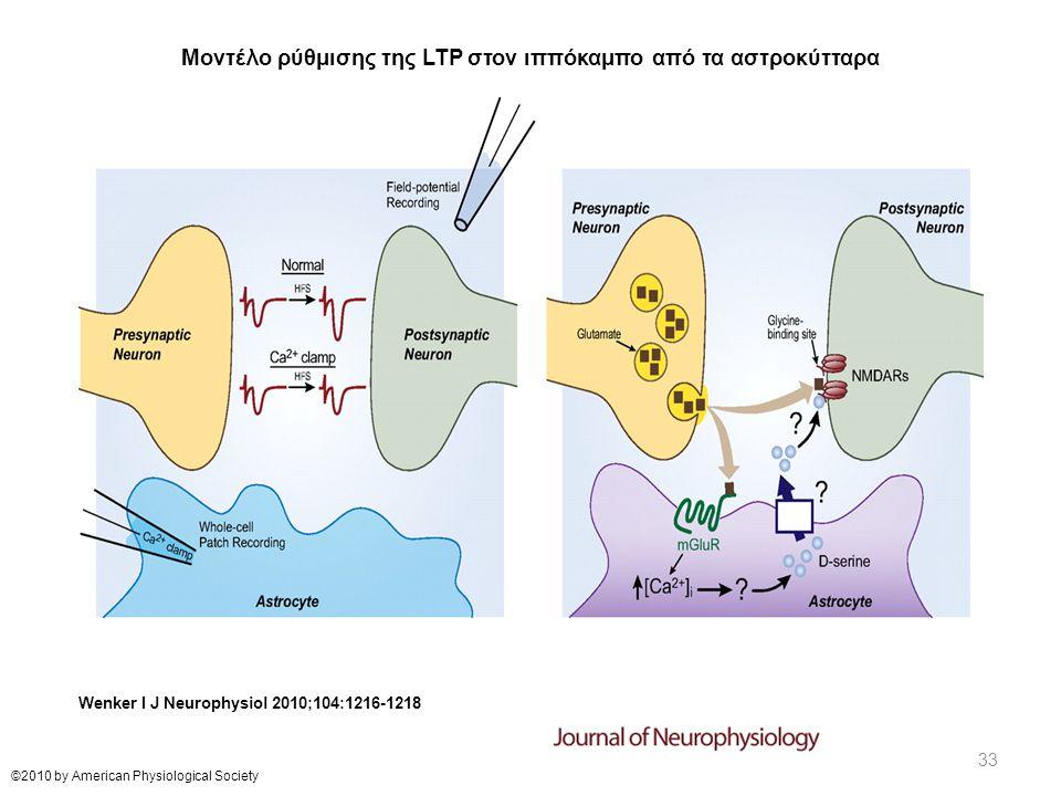 Μοντέλο ρύθμισης της LTP στον ιππόκαμπο από τα αστροκύτταρα Wenker I J Neurophysiol 2010;104:1216-1218 ©2010 by American Physiological Society 33