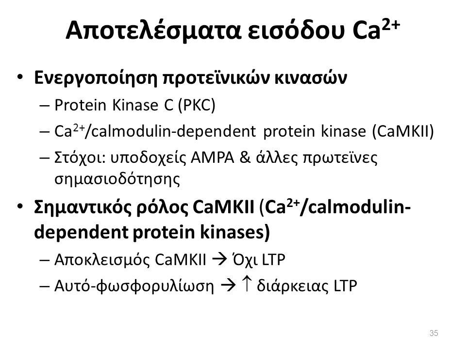 Αποτελέσματα εισόδου Ca 2+ Ενεργοποίηση προτεϊνικών κινασών – Protein Kinase C (PKC) – Ca 2+ /calmodulin-dependent protein kinase (CaMKII) – Στόχοι: υ