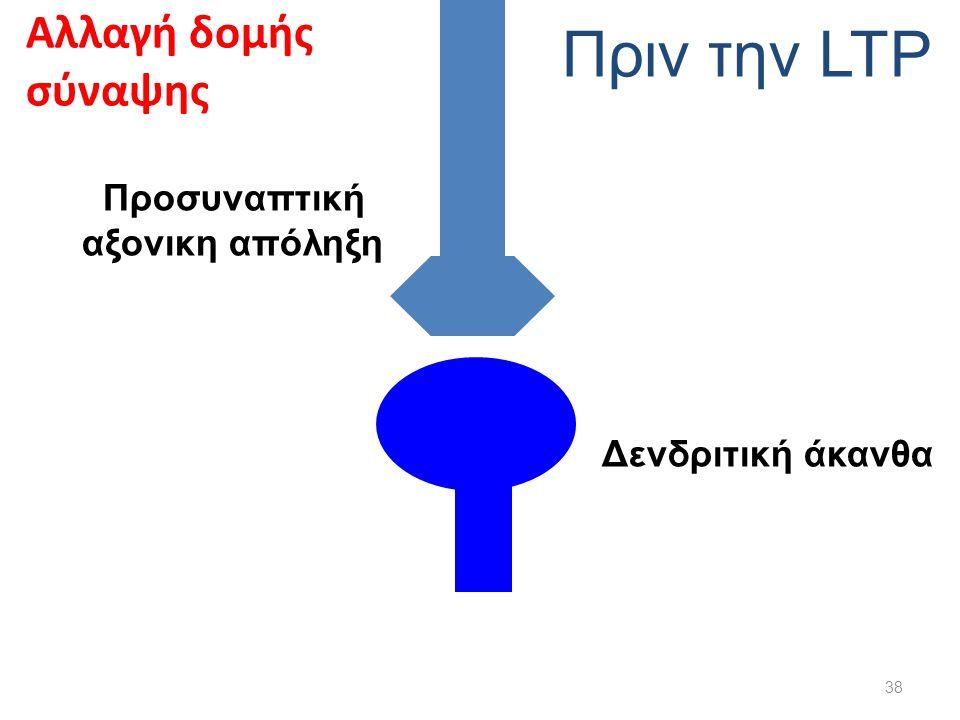 Προσυναπτική αξονικη απόληξη Δενδριτική άκανθα Πριν την LTP Αλλαγή δομής σύναψης 38