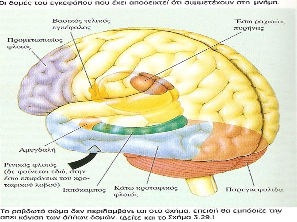 Πού στον εγκέφαλο μελετάται η LTP.