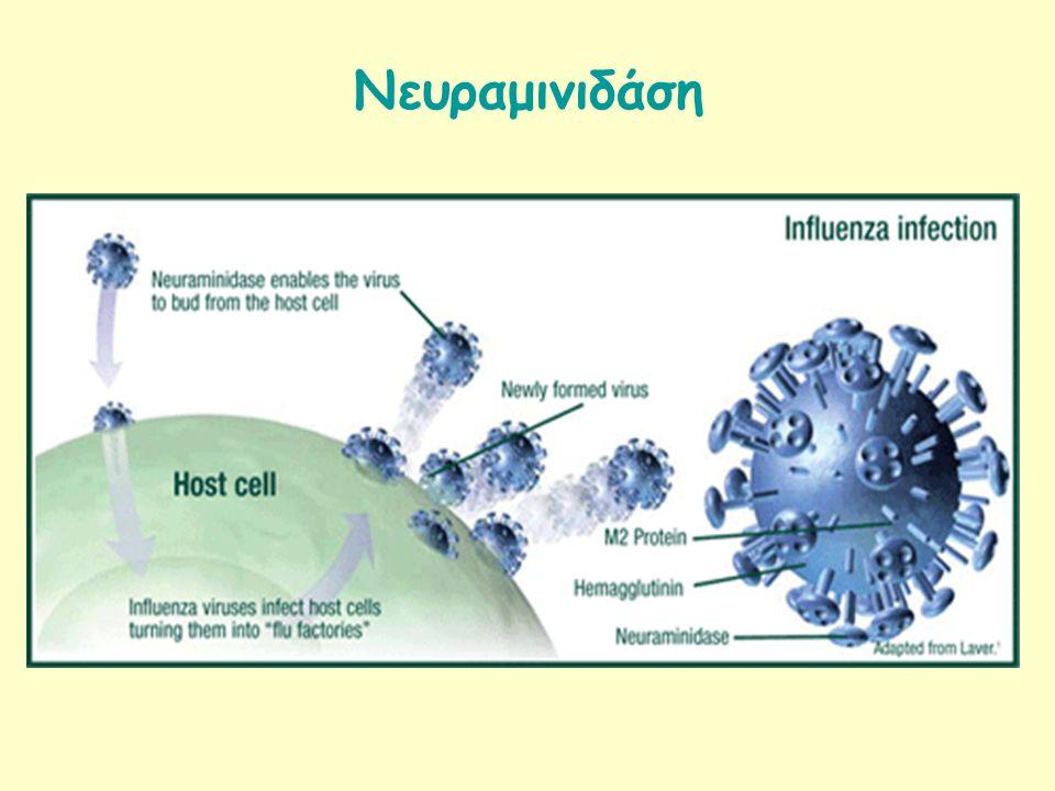 Νευραμινιδάση