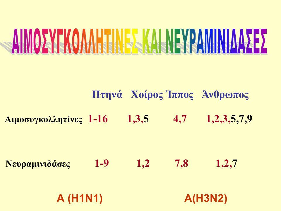 Πτηνά Χοίρος Ίππος Άνθρωπος Αιμοσυγκολλητίνες 1-16 1,3,5 4,7 1,2,3,5,7,9 Νευραμινιδάσες 1-9 1,2 7,8 1,2,7 Α (Η1Ν1) Α(Η3Ν2)