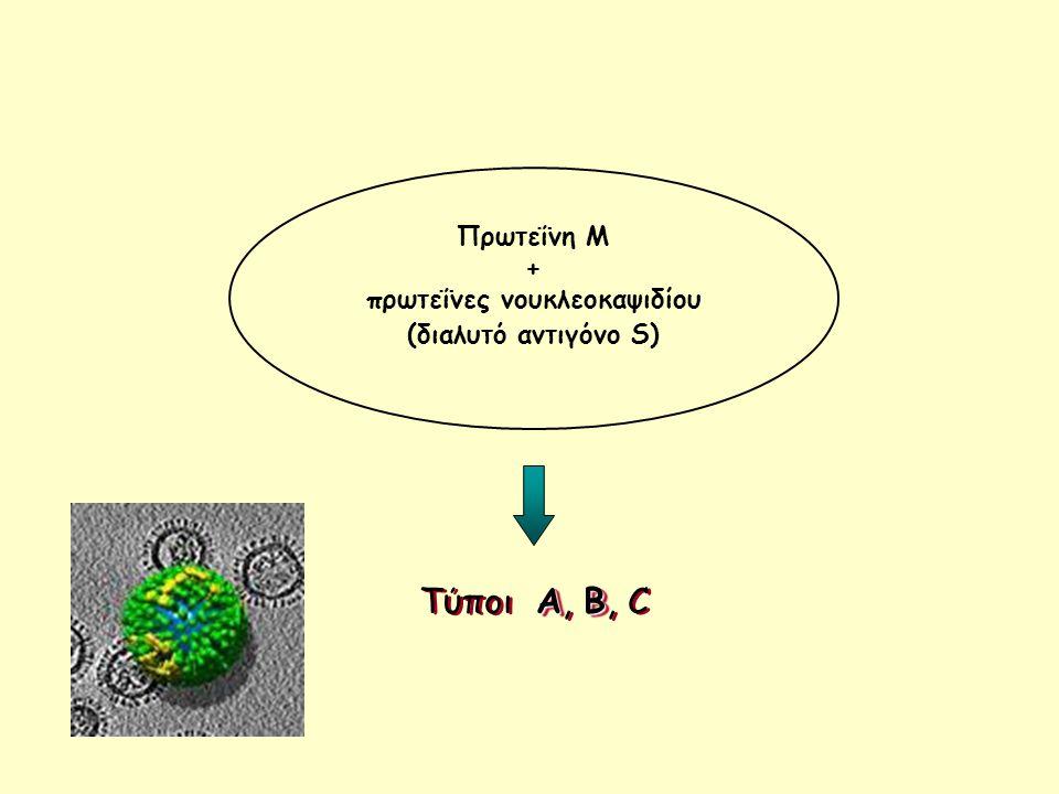 AB Τύποι A, B, C Πρωτεΐνη Μ + πρωτεΐνες νουκλεοκαψιδίου (διαλυτό αντιγόνο S)