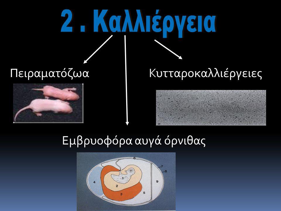 Πειραματόζωα Κυτταροκαλλιέργειες Εμβρυοφόρα αυγά όρνιθας