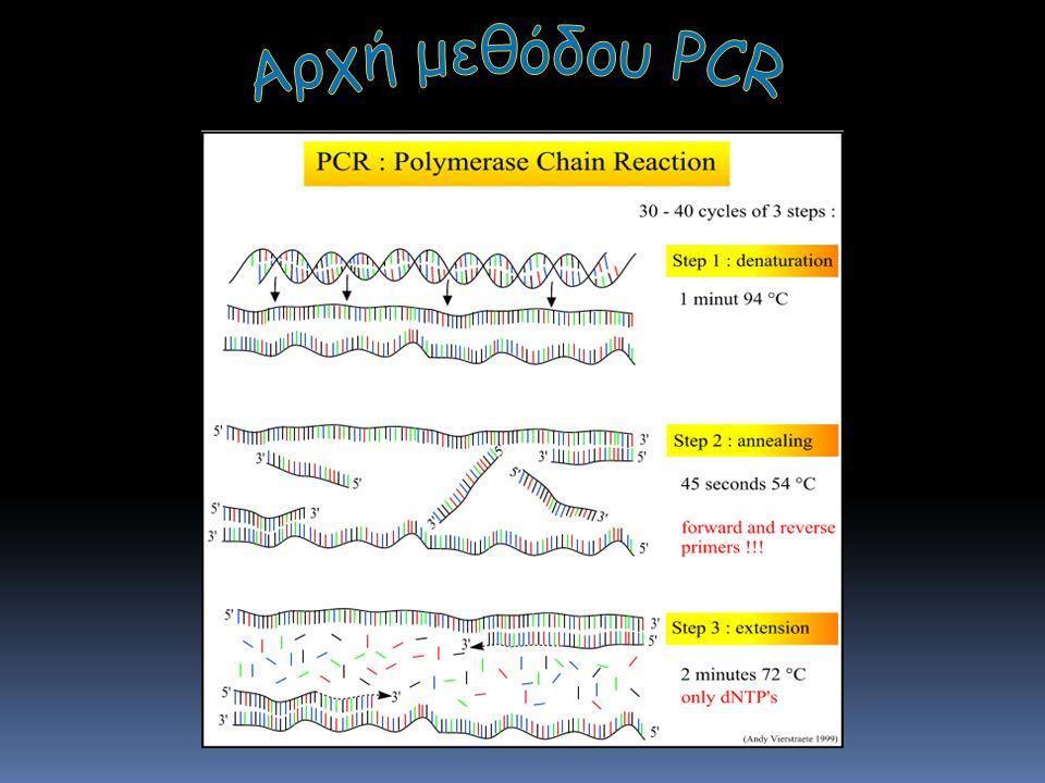 Αρχή της PCR