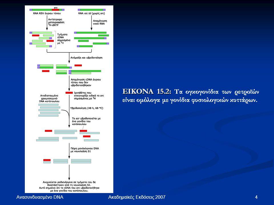 Ανασυνδυασμένο DNA 5Ακαδημαϊκές Εκδόσεις 2007 ΕΙΚΟΝΑ 15.3: ΕΙΚΟΝΑ 15.3: Ορισμένα καρκινικά κύτταρα φέρουν χρωμοσωμικές αναδιατάξεις.