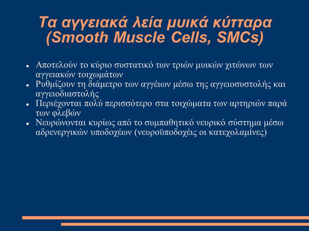 Τα αγγειακά λεία μυικά κύτταρα (Smooth Muscle Cells, SMCs) Αποτελούν το κύριο συστατικό των τριών μυικών χιτώνων των αγγειακών τοιχωμάτων Ρυθμίζουν τη