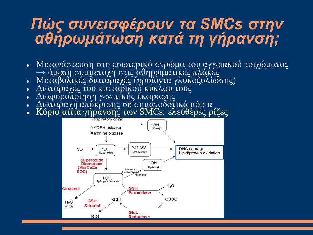 Πώς συνεισφέρουν τα SMCs στην αθηρωμάτωση κατά τη γήρανση; Μετανάστευση στο εσωτερικό στρώμα του αγγειακού τοιχώματος → άμεση συμμετοχή στις αθηρωματι
