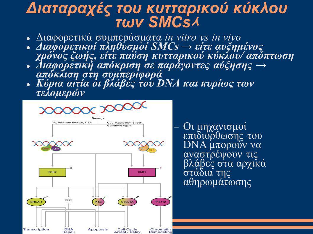 Διαταραχές του κυτταρικού κύκλου των SMCs ᄉ Διαφορετικά συμπεράσματα in vitro vs in vivo Διαφορετικοί πληθυσμοί SMCs → είτε αυξημένος χρόνος ζωής, είτ