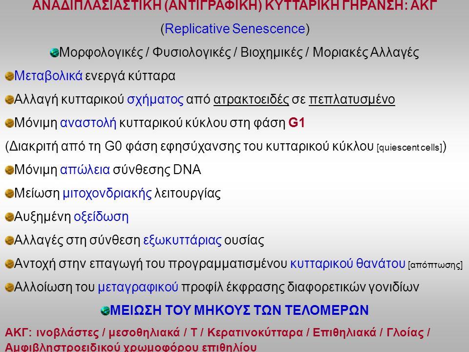 ANAΔΙΠΛΑΣΙΑΣΤΙΚΗ (ΑΝΤΙΓΡΑΦΙΚΗ) ΚΥΤΤΑΡΙΚΗ ΓΗΡΑΝΣΗ: ΑΚΓ (Replicative Senescence) Μορφολογικές / Φυσιολογικές / Βιοχημικές / Μοριακές Αλλαγές Μεταβολικά ενεργά κύτταρα Αλλαγή κυτταρικού σχήματος από ατρακτοειδές σε πεπλατυσμένο Μόνιμη αναστολή κυτταρικού κύκλου στη φάση G1 (Διακριτή από τη G0 φάση εφησύχανσης του κυτταρικού κύκλου [quiescent cells] ) Μόνιμη απώλεια σύνθεσης DNA Μείωση μιτοχονδριακής λειτουργίας Αυξημένη οξείδωση Αλλαγές στη σύνθεση εξωκυττάριας ουσίας Αντοχή στην επαγωγή του προγραμματισμένου κυτταρικού θανάτου [απόπτωσης] Αλλοίωση του μεταγραφικού προφίλ έκφρασης διαφορετικών γονιδίων ΜΕΙΩΣΗ ΤΟΥ ΜΗΚΟΥΣ ΤΩΝ ΤΕΛΟΜΕΡΩΝ ΑΚΓ: ινοβλάστες / μεσοθηλιακά / Τ / Κερατινοκύτταρα / Επιθηλιακά / Γλοίας / Αμφιβληστροειδικού χρωμοφόρου επιθηλίου